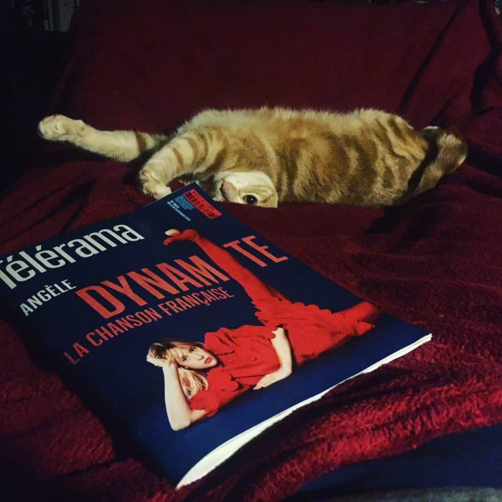 Clifton, Serial blogueuse's cat, et comme elle, fan d'Angèle