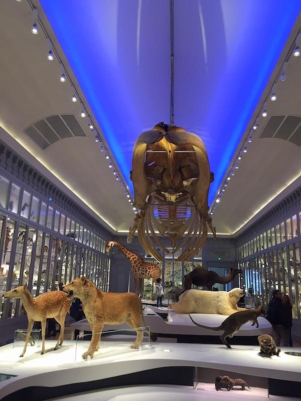 La Galerie Soubervie du Muséum de Bordeaux