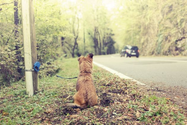 100 000 animaux abandonnés chaque année